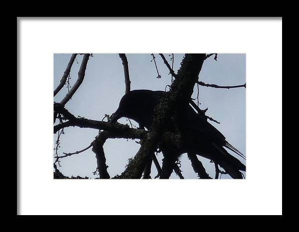 Photo Framed Print featuring the photograph Crow Silouette by Dawna Raven Sky