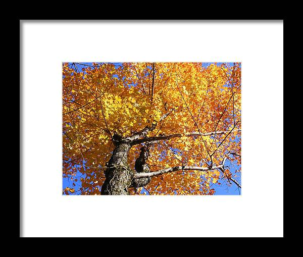 Trees Framed Print featuring the photograph Crown Fire by Dave Martsolf
