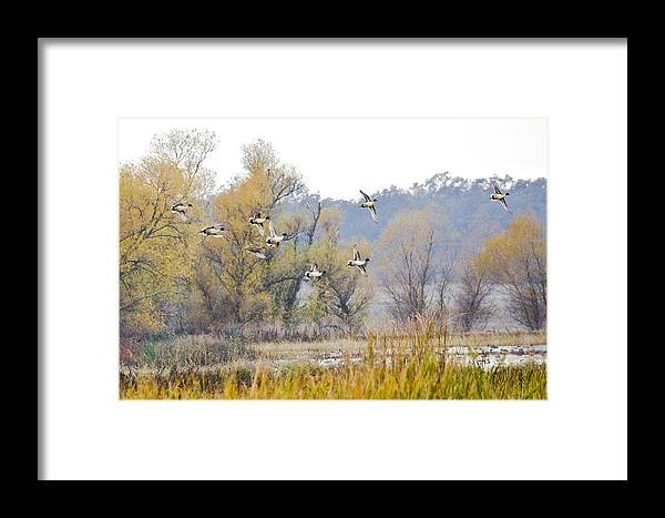 Nature Framed Print featuring the photograph Cruising The Pond by Charlie Osborn