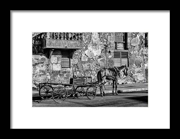 Cuban Horse Power; Cuban; Horse; Power; Horse And Carriage; Carriage; Hp; Cuba; Photography & Digital Art; Photography; Photo; Photo Art; Art; Digital Art; 2bhappy4ever; 2bhappy4ever.com; 2bhappy4evercom; Tobehappyforever; Framed Print featuring the photograph Cuban Horse Power BW by Erron