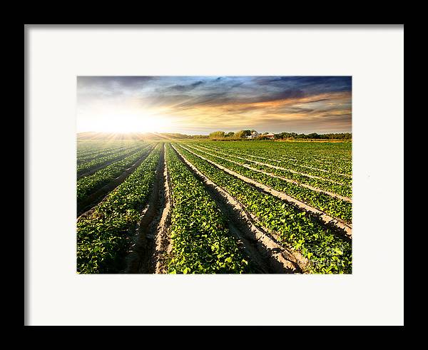 Agricultural Framed Print featuring the photograph Cultivated Land by Carlos Caetano