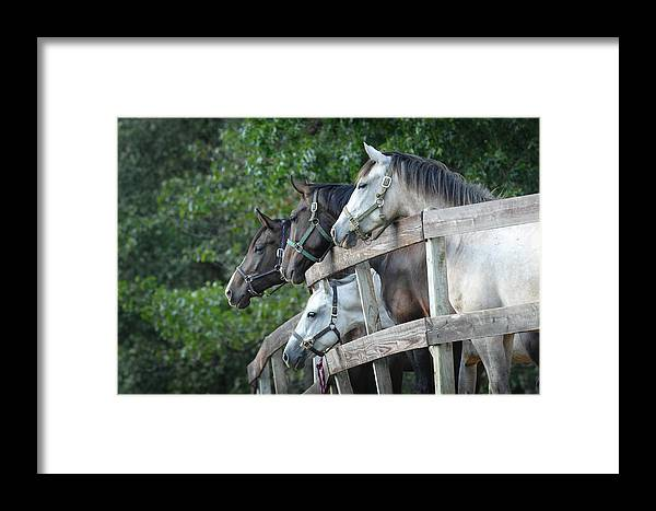 Equine Framed Print featuring the photograph Curiosity by Alicia Frese Klenk