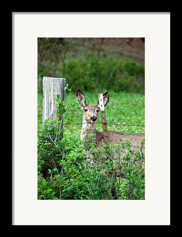 Framed Print featuring the photograph Curious by JK Photography