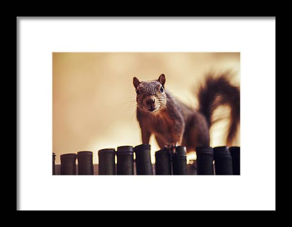 Squirrel Framed Print featuring the photograph Curious Squirrel by Chris Thodd