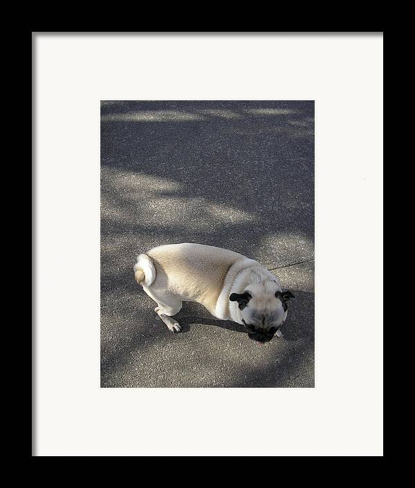 Dog Framed Print featuring the photograph Curtail by Christina Gardner