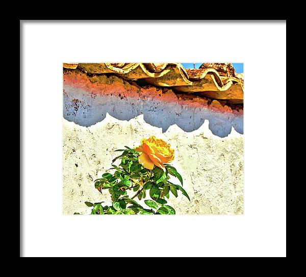 Yellow Rose Framed Print featuring the photograph Curtain by Edward Shmunes