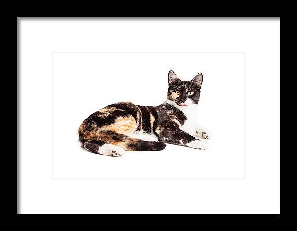 Adorable Framed Print featuring the photograph Cute Calico Kiten Sticking Tongue Out by Susan Schmitz