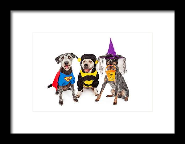 Animal Framed Print featuring the photograph Cute Dogs Wearing Halloween Costumes by Susan Schmitz