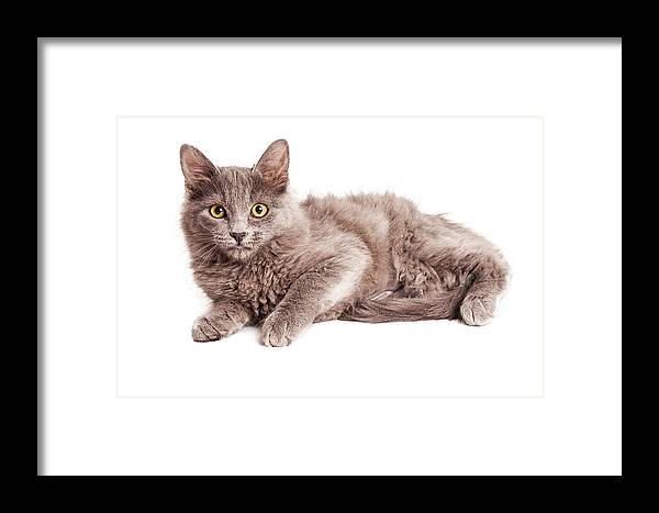 Adorable Framed Print featuring the photograph Cute Kitten Laying Over White Loking Forward by Susan Schmitz