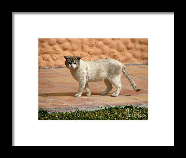 Sweet Kitty. Puerto Penasco Framed Print featuring the photograph Cute Mexican Kitty by Phyllis Kaltenbach