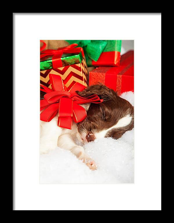 Adorable Framed Print featuring the photograph Cute Puppy With Red Bow Sleeping By Gifts by Susan Schmitz