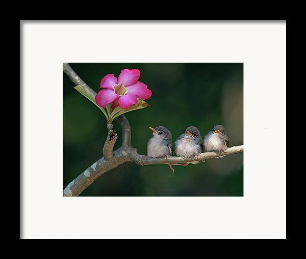 Horizontal Framed Print featuring the photograph Cute Small Birds by Photowork by Sijanto