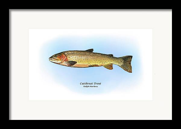Cutthroat Trout Framed Print featuring the painting Cutthroat Trout by Ralph Martens
