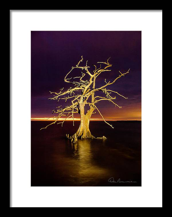 Albemarle Framed Print featuring the photograph Cypress At Sunset 2860 by Dan Beauvais
