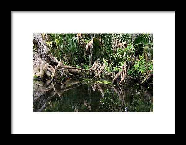 Cypress Tree Framed Print featuring the photograph Cypress Swamp by Barbara Bowen