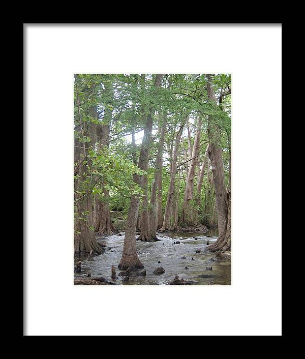 Creek Framed Print featuring the photograph Cypress Trees Cypress Knees by Rebecca Shupp