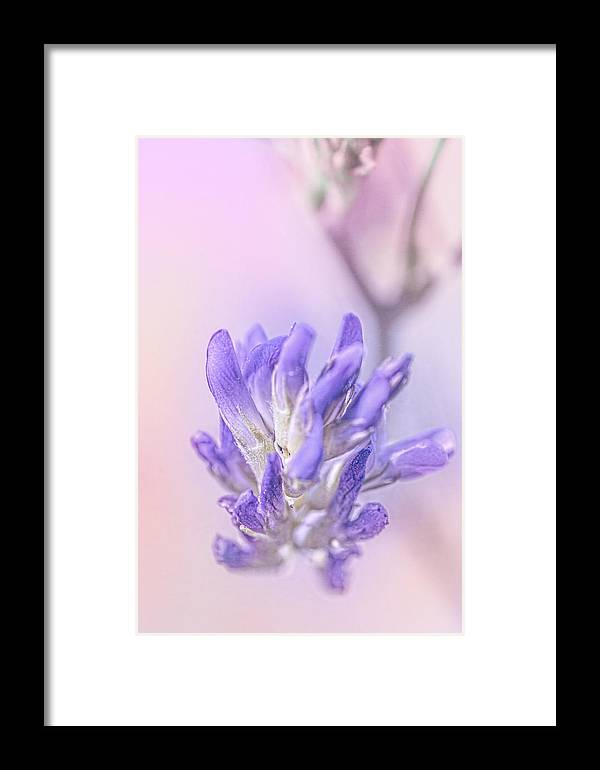 Flowers Framed Print featuring the photograph Cysur by Greg Collins