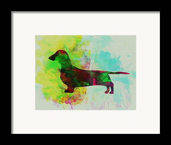 Dachshund Framed Print featuring the painting Dachshund Watercolor by Naxart Studio