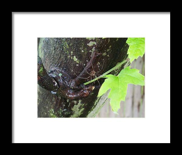 Nature Framed Print featuring the photograph Daddy Longlegs Hiding From The Rain by Ellen B Pate