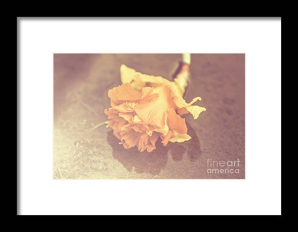 Faded Framed Print featuring the photograph Daffodil Reflections by Jorgo Photography - Wall Art Gallery