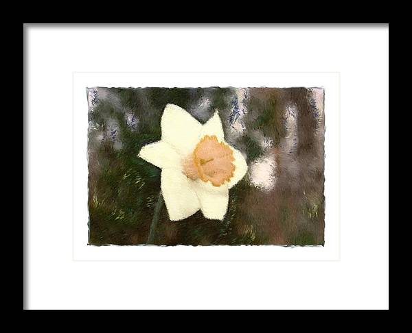 Abstract Framed Print featuring the photograph Daffodil by Sandy Belk
