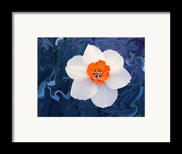 Flower Framed Print featuring the photograph Daffodill In Blue by Jim Darnall