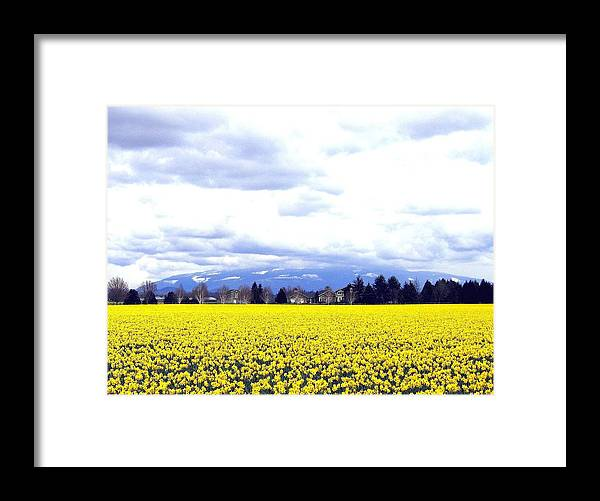Agriculture Framed Print featuring the photograph Daffodils By The Million by Will Borden