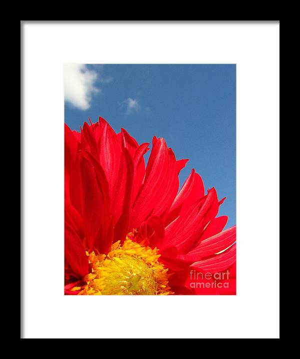 Dahlia Framed Print featuring the photograph Dahlia by Amanda Barcon