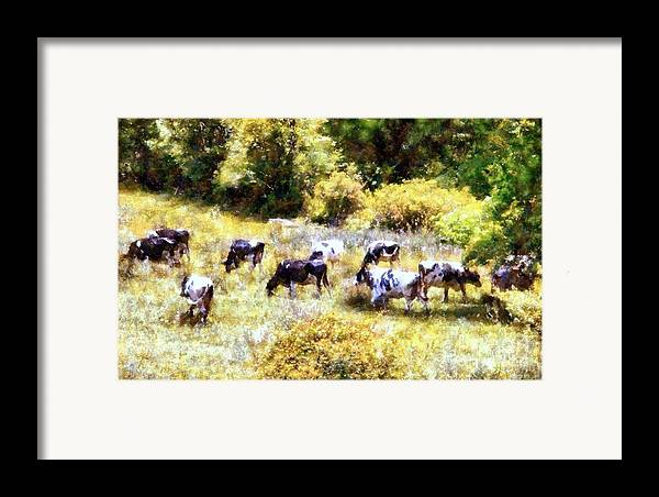 Holstein Cows Framed Print featuring the photograph Dairy Cows In A Summer Pasture by Janine Riley