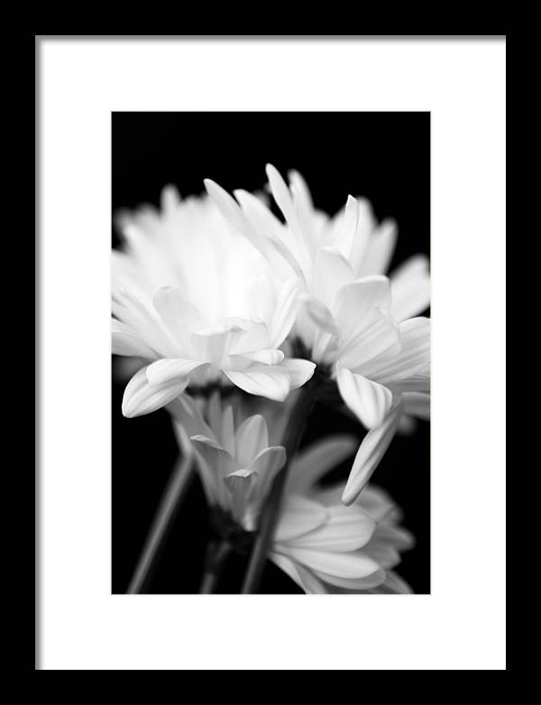 Floral Framed Print featuring the photograph Daises In Black And White by Ayesha Lakes