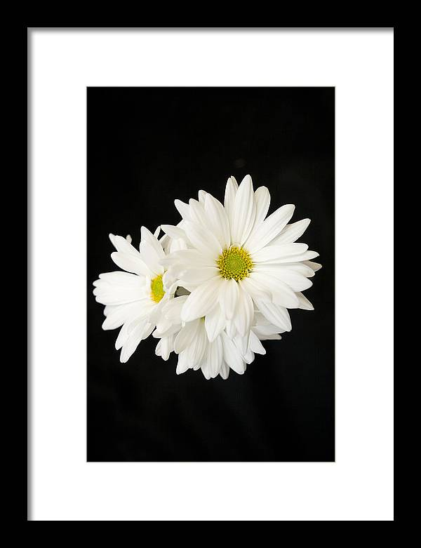 Floral Framed Print featuring the photograph Daisies by Ayesha Lakes