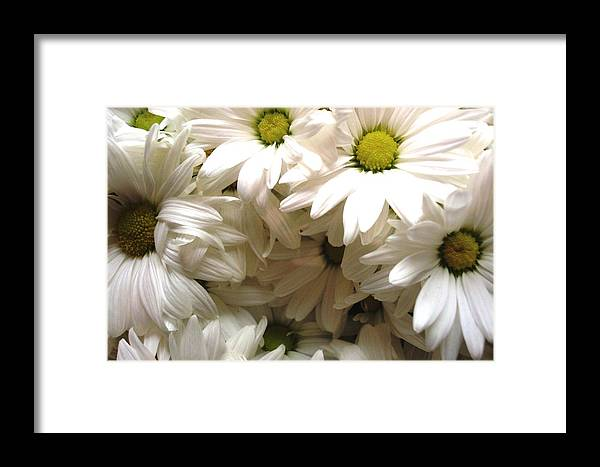 Flowers Framed Print featuring the photograph Daisies Make Me Smile by Laura Grisham