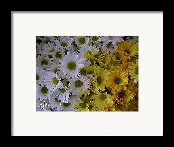 Daisies Framed Print featuring the photograph Daisies by Nancy Ferrier