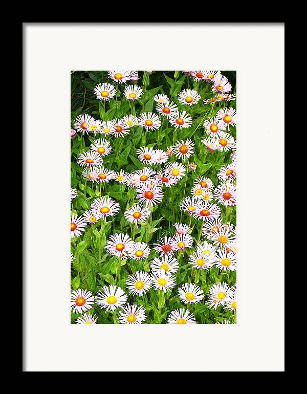 Floral Framed Print featuring the photograph Daisies by Robert Gladwin