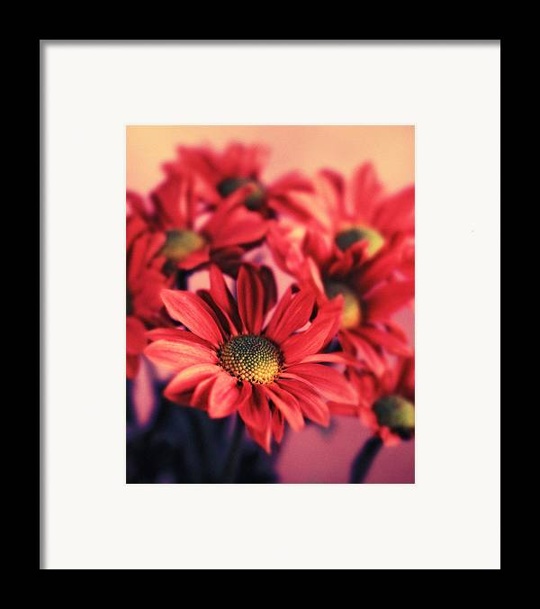 Flora Framed Print featuring the photograph Daisy 3 by Joseph Gerges