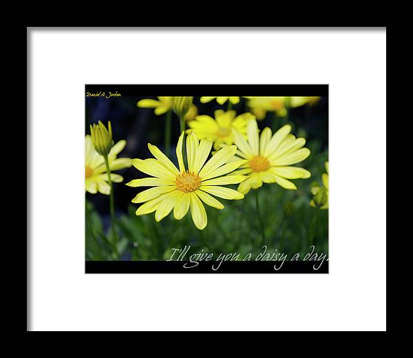 Flowers Framed Print featuring the photograph Daisy A Day by Dan Jordan