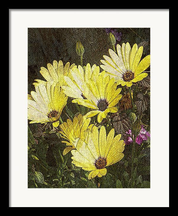 Digital Art Framed Print featuring the digital art Daisy Daisy by Tom Romeo