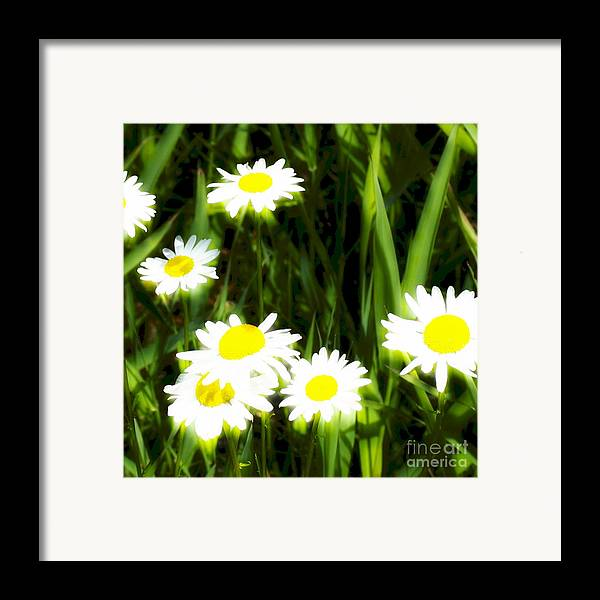 Daisies Framed Print featuring the photograph Daisy Dream by Idaho Scenic Images Linda Lantzy