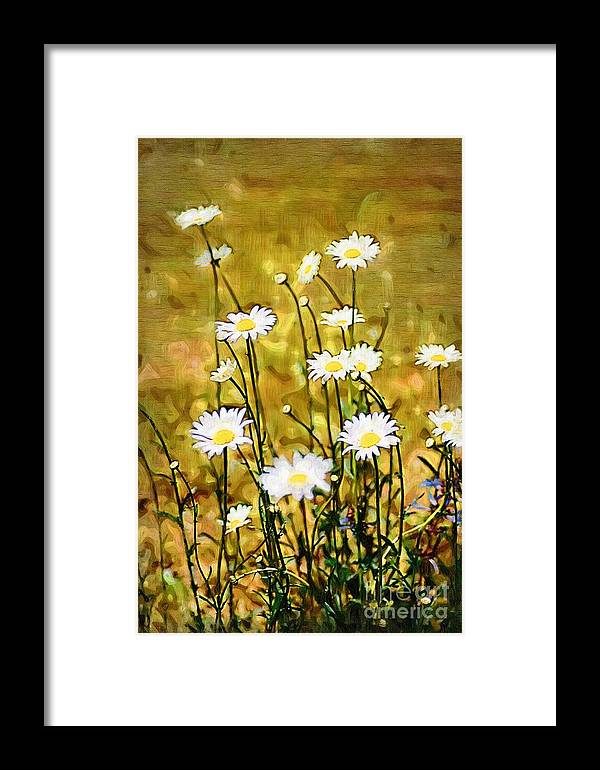 Daisy Framed Print featuring the photograph Daisy Field by Donna Bentley