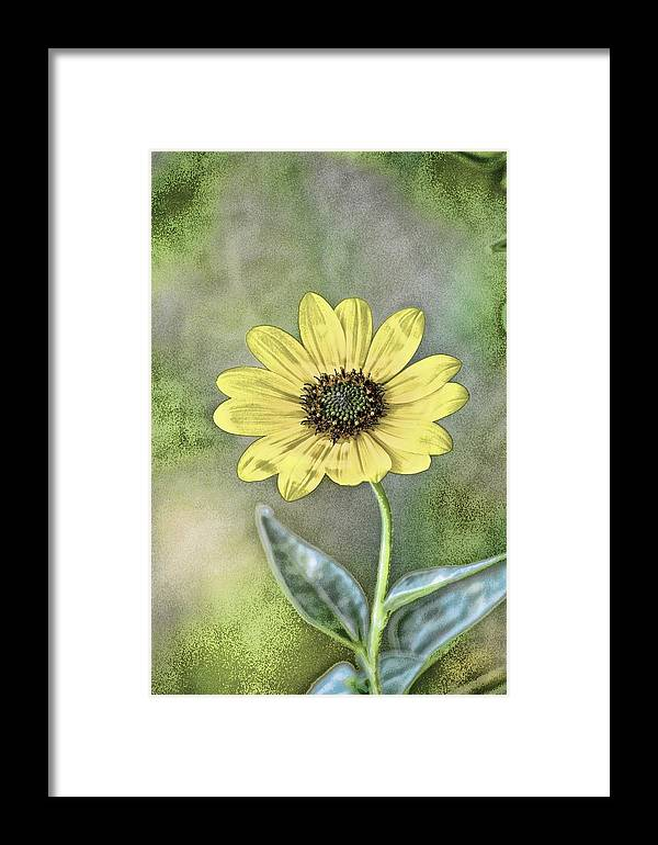 Flower Framed Print featuring the photograph Daisy by Tommy Simpson