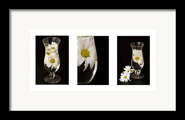 Flowers Framed Print featuring the photograph Daisy Triptych by Ayesha Lakes