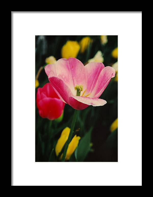 Flowers Framed Print featuring the photograph Dallas by Lori Mellen-Pagliaro