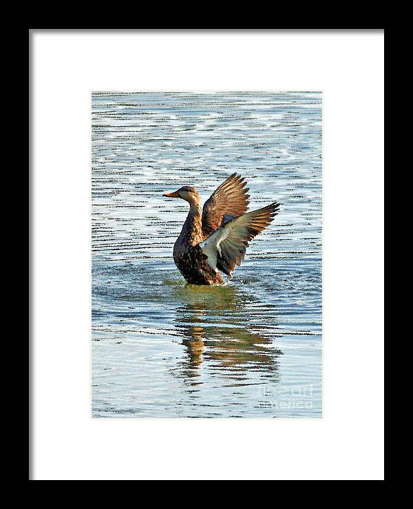 Mottled Teal Framed Print featuring the photograph Dancing Duck by Carol Groenen