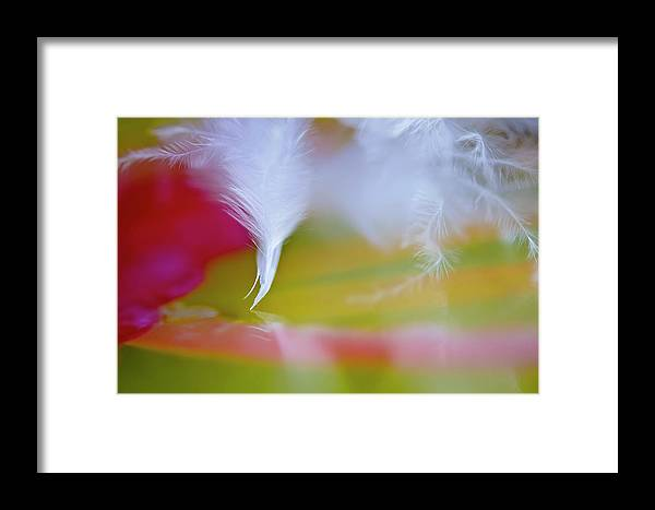 Feathers Framed Print featuring the photograph Dancing Feather by Christine Kapler