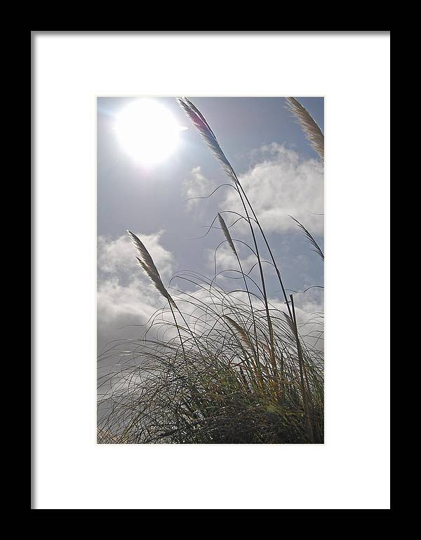 Wildgrass Framed Print featuring the photograph Dancing Grass by Jean Booth