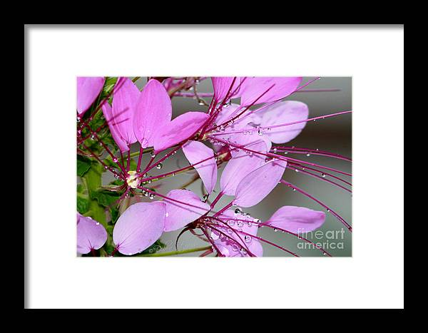 Flower Framed Print featuring the photograph Dancing In The Rain by Debra Straub