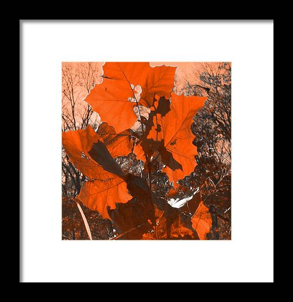 Leaves Framed Print featuring the photograph Dancing Leaves by Vijay Sharon Govender