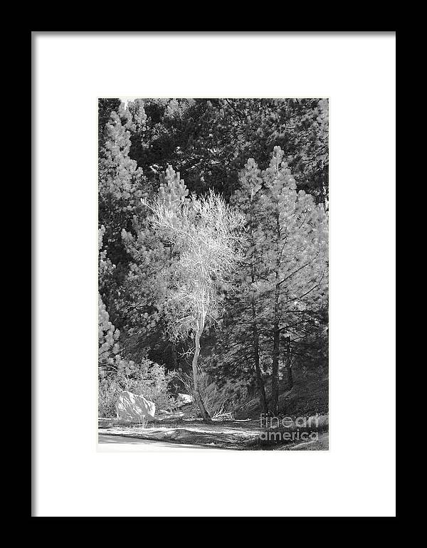 Nature Framed Print featuring the photograph Dancing Tree by Viktor Savchenko