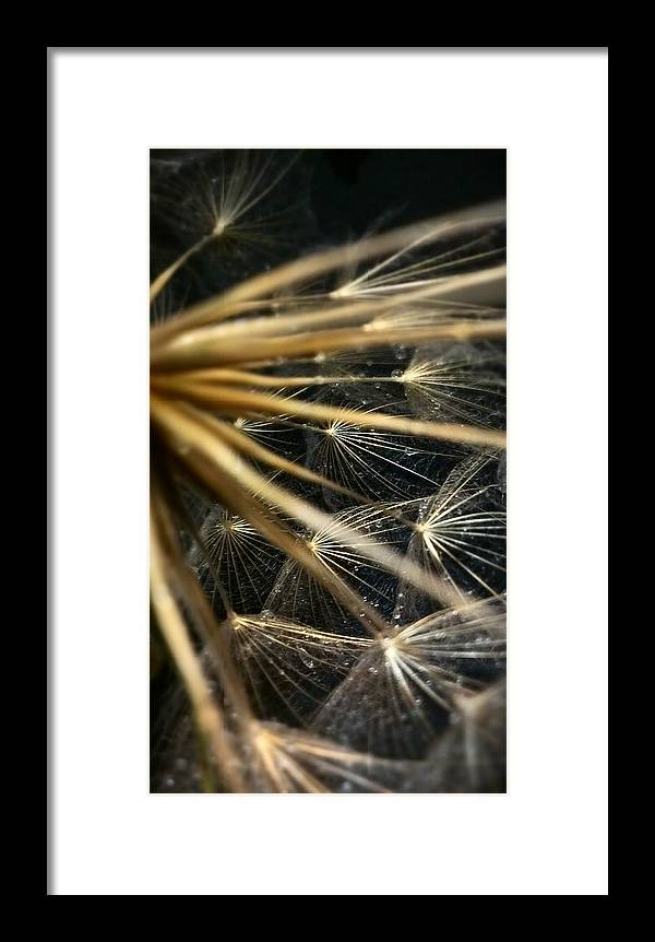 Dandelion Framed Print featuring the photograph Dandelion Forty Three by LKB Art and Photography