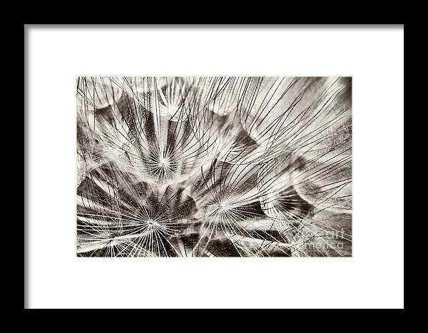 Dandelion Framed Print featuring the photograph Dandelion by Gabriela Insuratelu